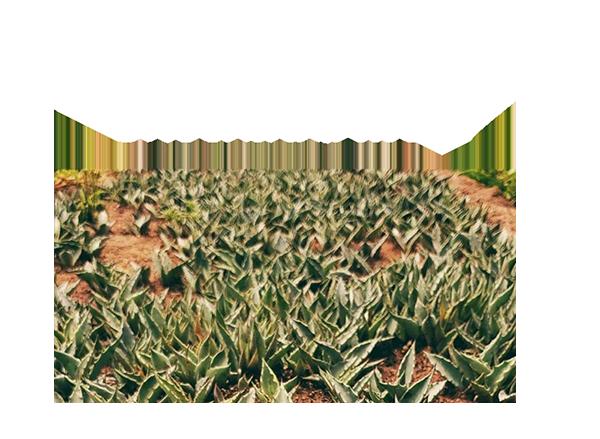 http://burritofiestero.com/wp-content/uploads/2020/05/BurritoFiestero_sustainability.png