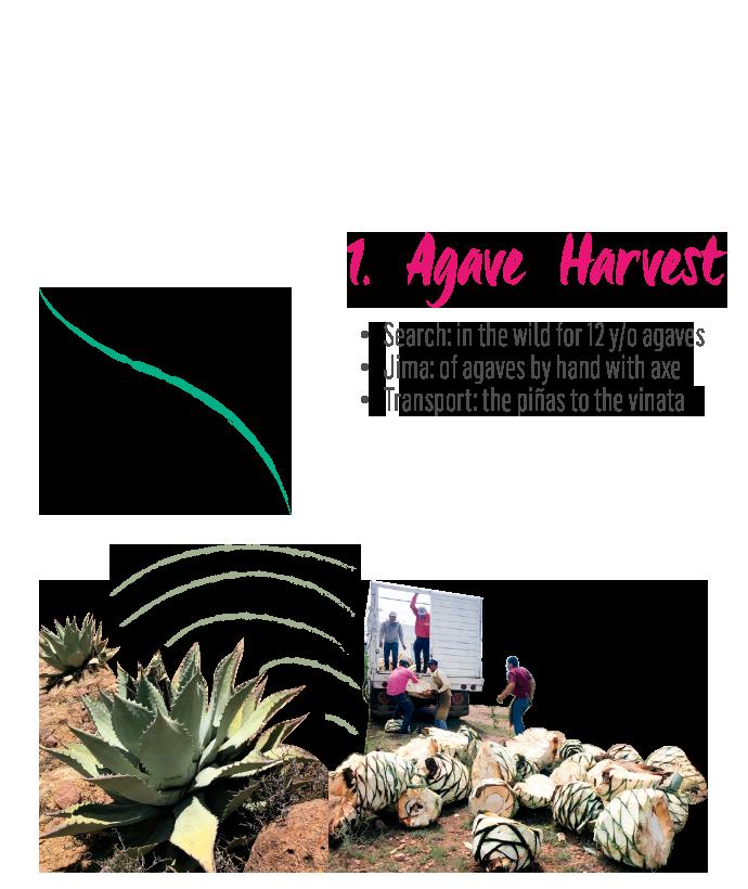 http://burritofiestero.com/wp-content/uploads/2021/02/MezcalBurrito_Process_Begin_Harvest.png