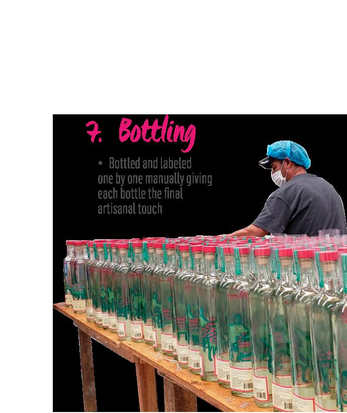 http://burritofiestero.com/wp-content/uploads/2021/02/MezcalBurrito_Process_Bottling.png